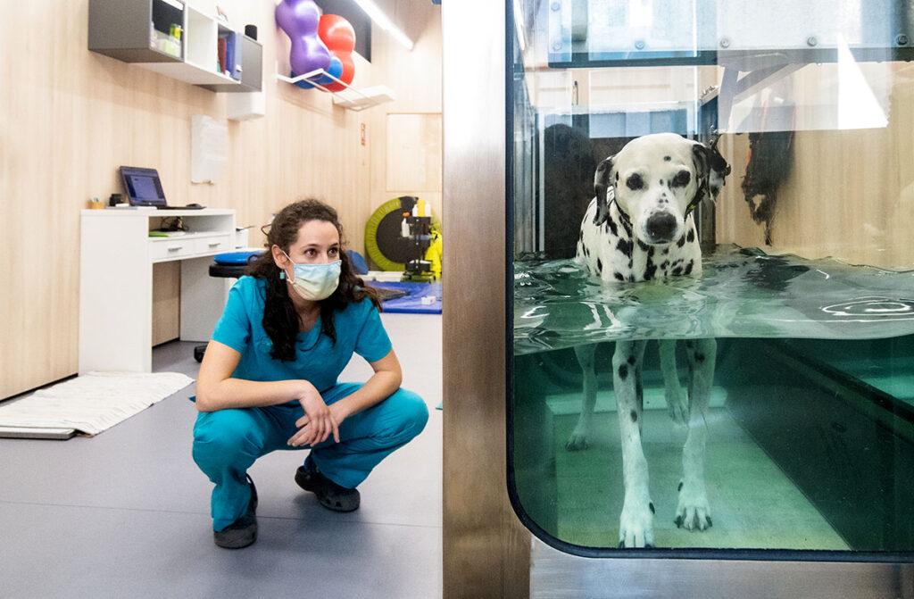 CRAR BCN, rehabilitación felina