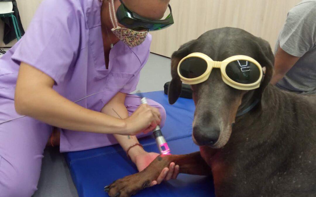Teràpia làser: el pas a pas del seu ús en Veterinària