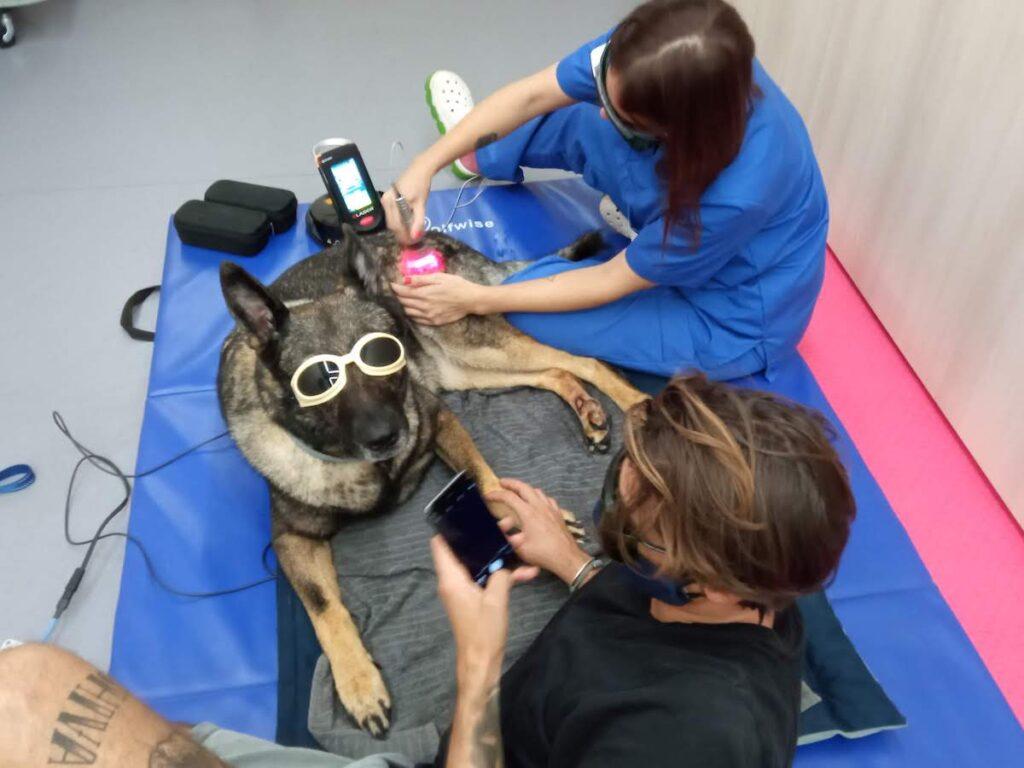 fisioteràpia veterinària