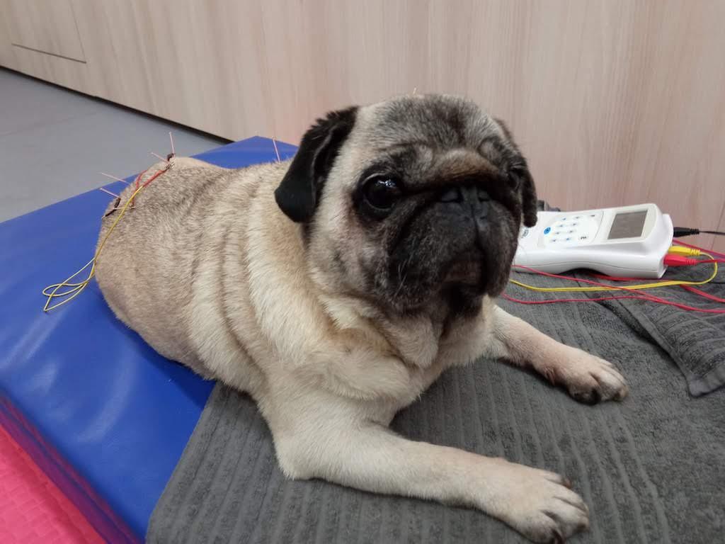 Pacient durant una sessió d'electroacupuntura al CRAR.